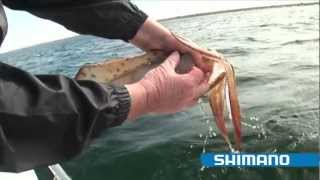 Download How to catch Squid ″Part 1″ - SHIMANO FISHING Video