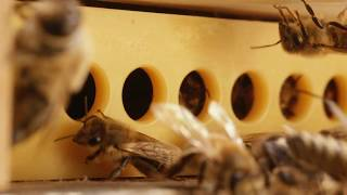 Download Varroa Gate - A new solution for healthy honey bee hives Video