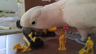 Download The Construction Crew Attacked By A 30 Foot Cockatoo!! Video