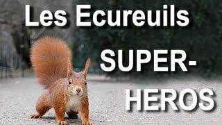 Download LES ÉCUREUILS SUPER-HÉROS - PAROLE D'ÉCUREUIL Video