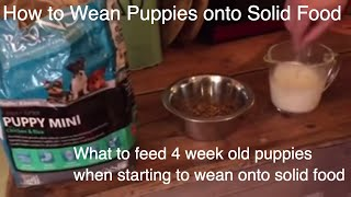 Download What to feed 4 week old puppies when starting to wean onto solid food part 1 Video