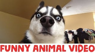 Download (IMPOSSIBLE) TRY NOT TO LAUGH - FUNNY ANIMAL COMPILATION Video