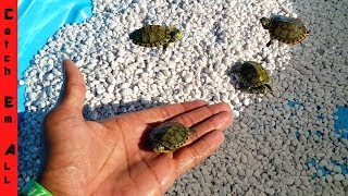 Download MINI POOL Pond for BABY TURTLES! Video