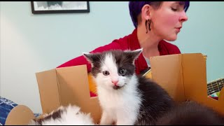 Download Covered With Kittens S2E11 ″Burn″ (Hamilton) Video