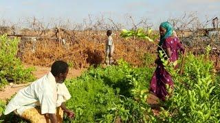 Download Somália: apoio às comunidades durante conflitos prolongados Video