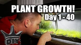 Download Planting my nano aquarium!! Video