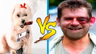 Download Cats And Dogs vs People - Funny Animals Attack Humans - Funny Animals Get Their Revenge Part 2 Video