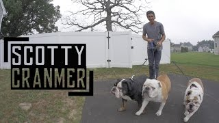 Download Day In The Life: My English Bulldogs! Video