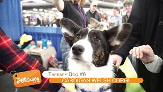 Download Top 10 Best Therapy Dog Breeds Video