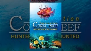 Download Fascination Coral Reef: Hunters & The Hunted Video