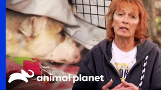Download Rescuing a Mama Dog and Newborn Puppies | Pit Bulls and Parolees Video