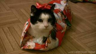 Download How To Wrap A Cat For Christmas Video