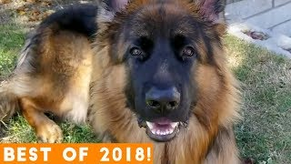 Download BEST ANIMALS OF 2018 Pt. 2 | Funny Pet Videos Video
