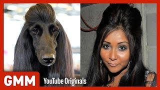 Download Dog Hair Or Celebrity Hair? (GAME) Video