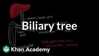 Download Biliary tree   Gastrointestinal system physiology   NCLEX-RN   Khan Academy Video