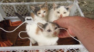 Download Kittens were waiting for me on the street in a box Video
