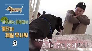 Download 세상에 나쁜 개는 없다 - 거봉이는 세상에서 계단이 제일 무서워 #003 Video