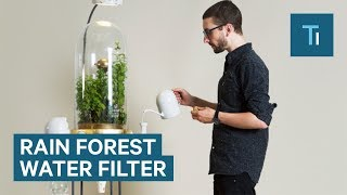 Download This Mini Rain Forest Is The Most Insane Way To Get Water Video