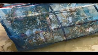 Download A smart man using trap catch crab in river Video