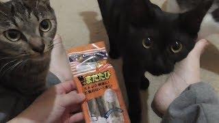 Download マタタビを与えてみました 子猫 保護 60日目 Video