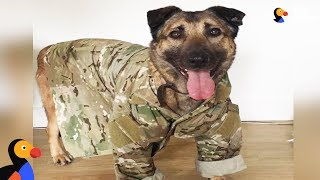 Download 'Dangerous' Military Dog Just Wants To Cuddle Now | The Dodo Video