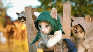 Download Assassin's Kittens! Video