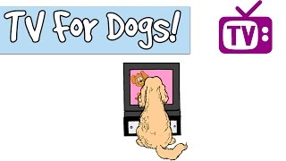 Download 3 HOURS OF TV for Dogs, Combined with Relaxing Music for Dogs, Stimulation for Dogs and Puppies 🐶📺 Video