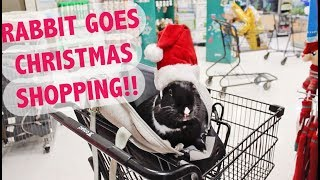 Download RABBIT GOES CHRISTMAS SHOPPING! 🐰🎄 Video