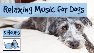 Download 3 Hours of Relaxation Music for Dogs, Calm Them During Firework Displays and Thunderstorms! Video