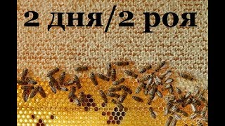 Download Как я ловлю пчёл в лесу . Поймали очередной рой . Video