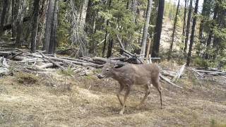 Download A Year in the Life of a Trail Camera Video
