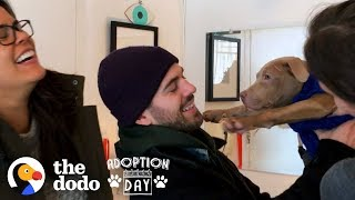 Download Pit Bull Puppies Were Found On The Street and Then Reunited Months Later | The Dodo Adoption Day Video