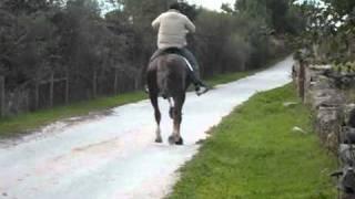 Download Nelson em cavalo Lazão (passo travado) Video