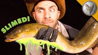 Download SLIMED by a GIANT EEL! Video