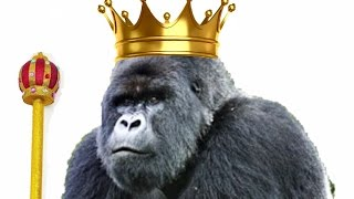 Download A Gorilla King, the True Story of Titus the King of Gorillas Video