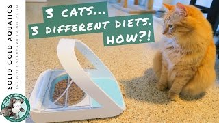 Download My Cats Learned Something New! // SureFeed Microchip Cat Feeder Unboxing & Review Video