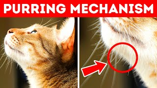 Download 40 Awesome Cat Facts to Understand Them Better Video