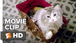 Download Nine Lives Movie CLIP - Who Needs a Litter Box? (2016) - Kevin Spacey Movie Video