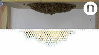 Download Shake those bees back and forth: Smart swarm intelligence Video