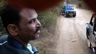 Download Tiger's Sighting at Ranthambore Tiger Reserve Video