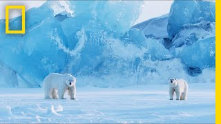 Download How to Photograph Polar Bears in One of the Most Extreme Places on Earth | Short Film Showcase Video