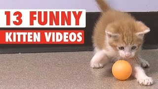 Download 13 Funny Kittens Video Compilation 2016 Video