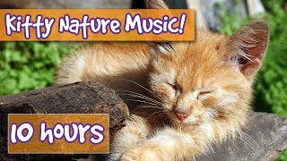 Download Relaxing Cat and Kitten Music with Nature Sounds! Music to Calm Cats with Nature and Animal Sounds! Video