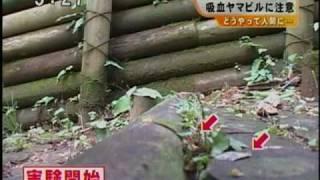 Download ヤマビルの現状と対処法 Video