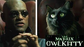 Download Morpheus meets my Cat (The Matrix) Video