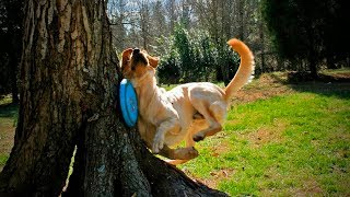 Download Funny Pets Fails 😂🐶 Funny Dogs Who Fail at Being Dogs (Part 2) [Funny Pets] Video