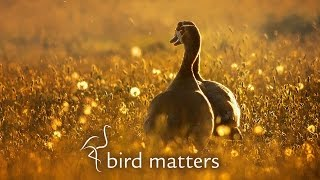 Download Beautiful Photography of Garden Birds: Bird Matters Video