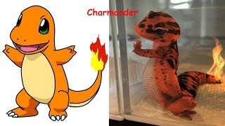 Download Pokemon in Real Life | Pokemon Characters as Monsters 2017 Video
