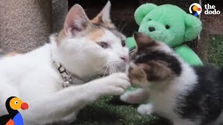 Download Kittens Reunited With Mom After Rescue From Factory | The Dodo Video