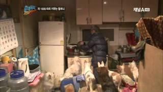 Download 개 1000마리 키우는 할머니 Video